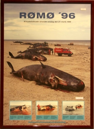 Depicting the tragic stranding of 16 sperm whales on the Danish island of Rømø in 1996